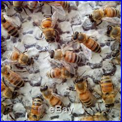 7 Tubes Honey Auto Outflow Hive Beehive Frames + Beekeeping Super Brood Box Kit#