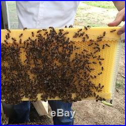 7PCS Upgraded Bee Hive Flow Honey Beehive Frames + 1PC Beekeeping Wooden Box