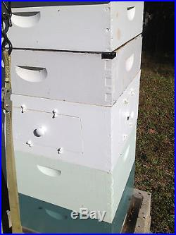 8 frame Observation hive Langstroth Beehive with removeable doors Painted 8 Frame