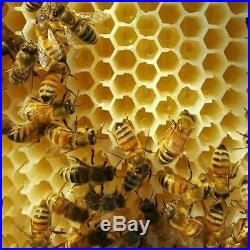 HipsterBee! Auto Flow Frame Beehive 1-Brood 1-Super 7-Auto Frames 1-Key 7-Tubes